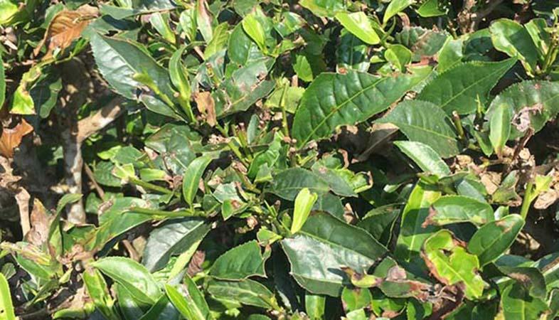 Để cây trồng phát triển tốt, đạt năng suất cao thì việc sử dụng chất điều hòa sinh trưởng là điều không thể bỏ qua
